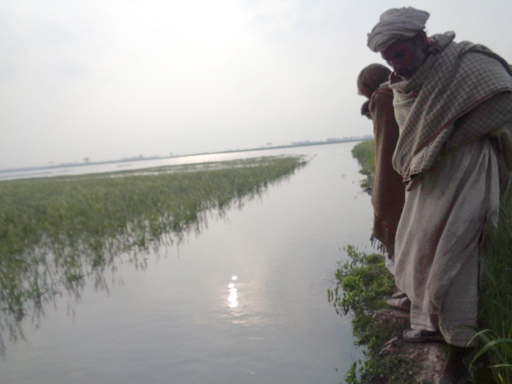Farmers looking at their crops which are now lost to rain-water floods.