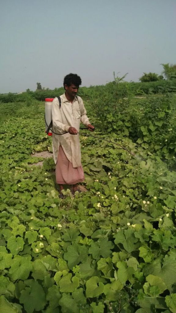 Application of biological pesticides on vegetables.